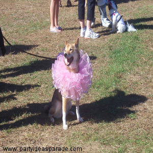 Halloween Costume for Dogs...the Ballerina Pet Costume