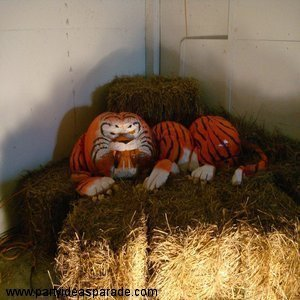 Amazing Pumpkin Carving and Painting Picture...it's a Tiger made from lots of pumpkins