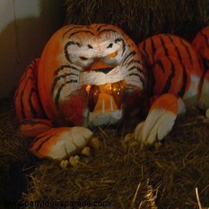Tiger Pumpkin display.  This amazing pumpkin is carved and painted.