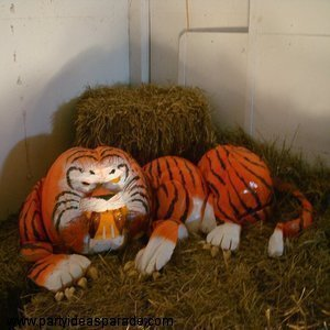 Tiger Pumpkin Work of Art from the Annual Giant Pumpkin Carve